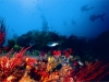Reef at Algoa Bay